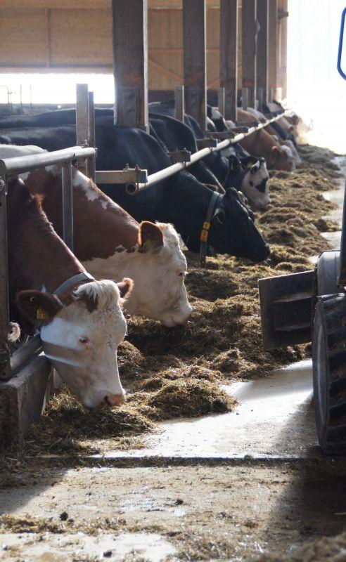 Rationsberechnung milchvieh kostenlos